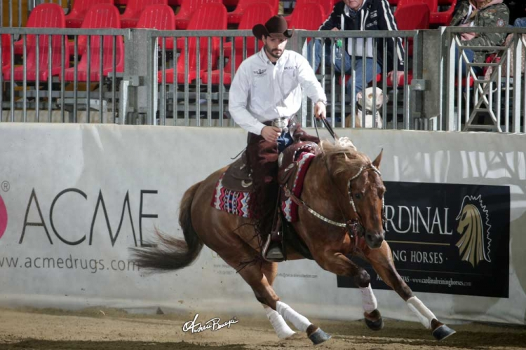 Futurity 2018 - MANUEL CORTESI & PC MAGNUM STEP DREAM owner AZ. AGR. CORTESI PIERO score 218,5