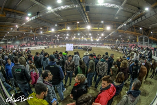 XXXIV IRHA FUTURITY 2018: numbers and location